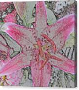 star Flower as Pencil Sketch Canvas Print
