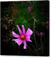 Star Flower Canvas Print