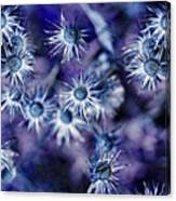 Star Flowers Canvas Print