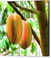 Star Fruit On The Tree Canvas Print