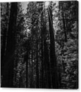 Star In The Forrest Canvas Print