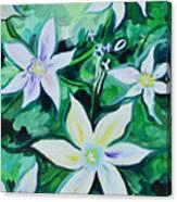 Star Of The Garden Canvas Print