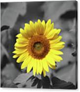 Star Of The Show - Standing Out Canvas Print