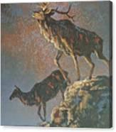 Star Spangled Bugle Canvas Print