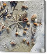 Starfish And Sea Shells Canvas Print