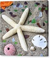 Starfish Beach Still Life Canvas Print