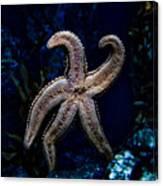 Starfish On Glass Canvas Print