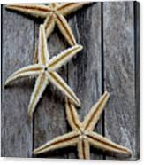 Starfishes In Wooden Canvas Print