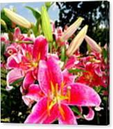 Stargazer Lilies #2 Canvas Print