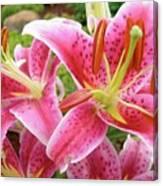 Stargazer Lilies At Their Best Canvas Print