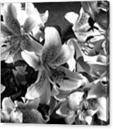 Stargazer Lilies Bw Canvas Print
