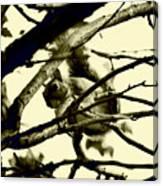 Staring Squirrel Canvas Print