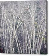 Stark Winter Canvas Print