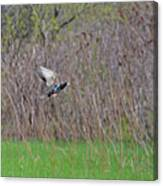 Starling Take-off Canvas Print