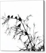 Starlings Canvas Print