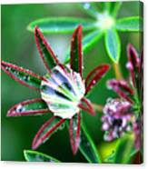Starry Droplets Canvas Print