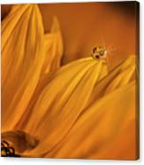 Starry Sunflower Canvas Print
