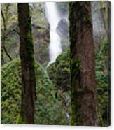 Starvation Creek Falls Between The Trees Canvas Print