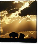 Stately American Bison Canvas Print