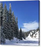 Stately Pines Canvas Print