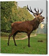 Stately Stag Canvas Print