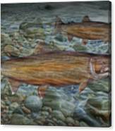 Steelhead Trout Fall Migration Canvas Print