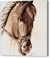 Steely Black Stallion Canvas Print