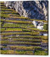 Steep Slope Viticulture In Valais Canton Canvas Print