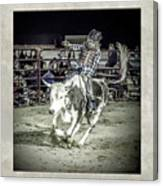 Steer Buck Out _c Canvas Print