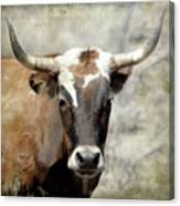 Steer Bull Canvas Print