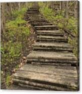 Step Trail In Woods 17 A Canvas Print