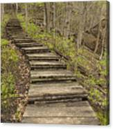 Step Trail In Woods 17 B Canvas Print