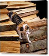Stepping Down - Calico Cat On Beech Woodpile Canvas Print