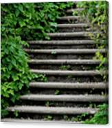 Steps With Ivy Canvas Print