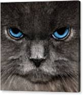 Stern Kitty Canvas Print
