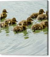 Stick Together Guys Canvas Print