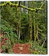 Sticking Out In The Rain Forest Canvas Print