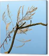 Sticks Canvas Print
