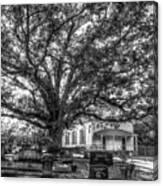 Still Faithful B W God Bethany Presbyterian Church The Old Oak Tree Greene County Georgia Art Canvas Print