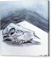 Still Life Drawing Cow Skull 02 Canvas Print