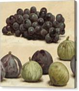 Still Life Of Grapes And Figs Canvas Print