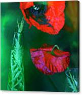Still Life With Poppies. Canvas Print