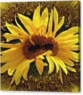 Still Life With Sunflower Canvas Print