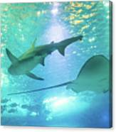 Sting Ray And Shark Canvas Print