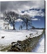 Stone Fence, Weardale, County Durham Canvas Print