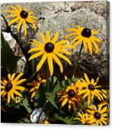 Stone Flowers Black Eyed Susan Canvas Print