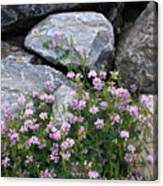 Stone Flowers Pink Canvas Print