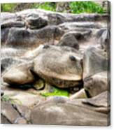Stone Frog Canvas Print