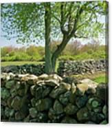 Stone Wall In Rhode Island Canvas Print
