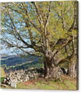 Stone Wall Spring Landscape Canvas Print